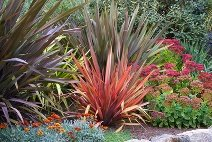 Perennial Shade Garden