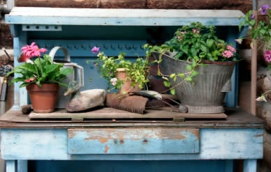Container Gardening in Shade
