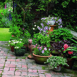 Garden Pots and Containers with plants and flowers