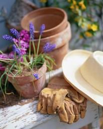 Shade garden tips pots