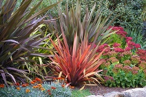 Perennial Shade Garden with Red Grasses