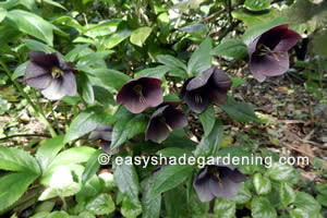 Shade Garden Plants Flowers