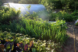 Vegetable Garden with Polytunnel