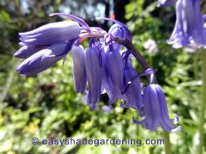 Blue Shade Plants Flowers