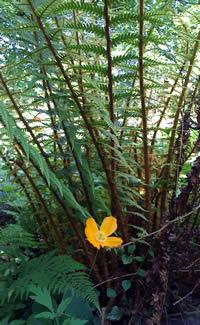 Shade Garden Ferns
